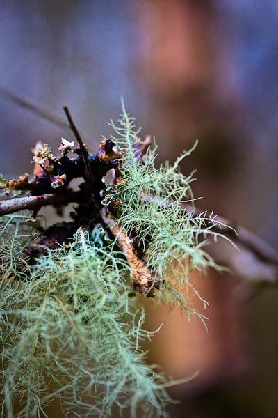 QEFP lichen