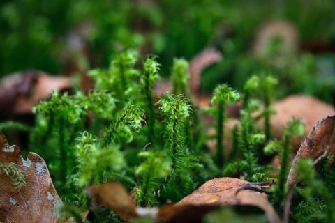 QEFP ferns or mosses