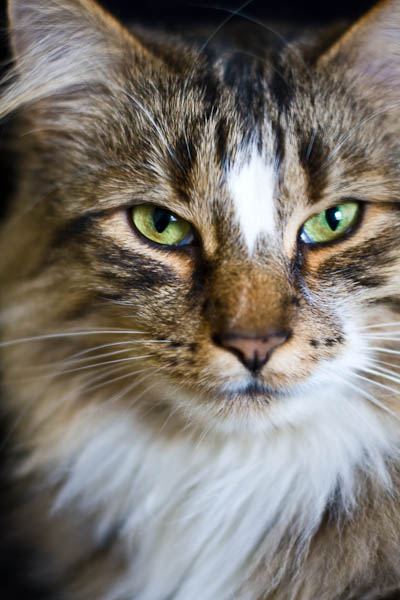 Kat's Cat